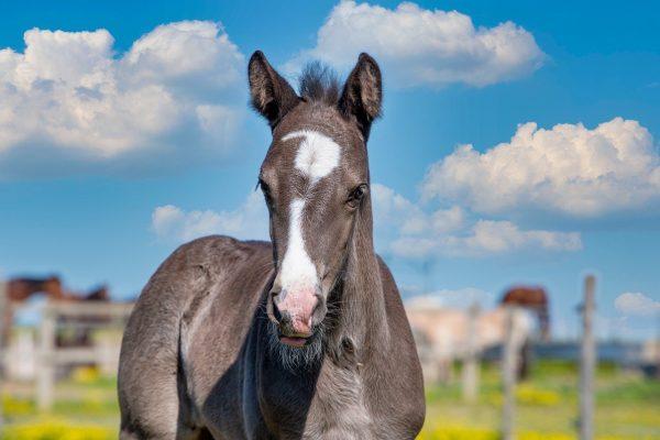 horse, foal, animal-6309050.jpg